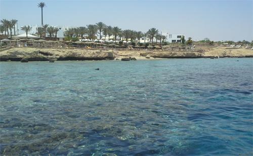 zhivotnye egipta 1