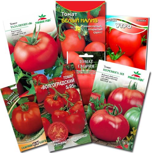 pomidory vyrashchivanie 13