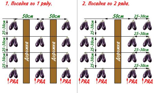 vyrashchivanie baklazhanov 6