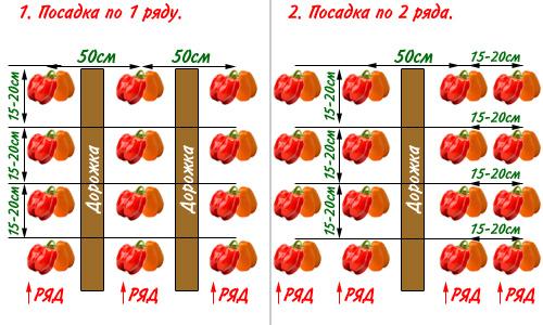 vyrashchivanie baklazhanov 7