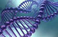 geny i beremennost 2