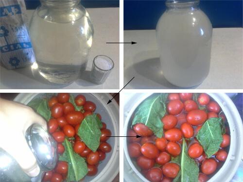 pomidory v bochke 10