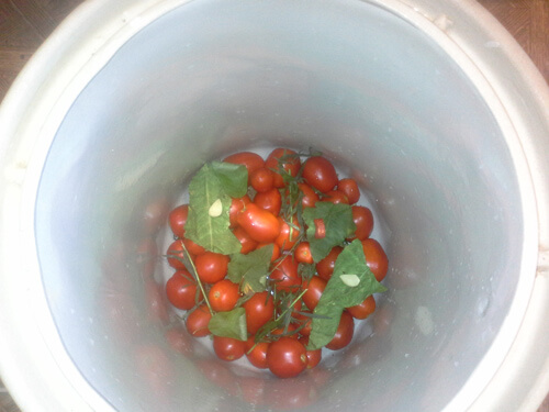 pomidory v bochke 5