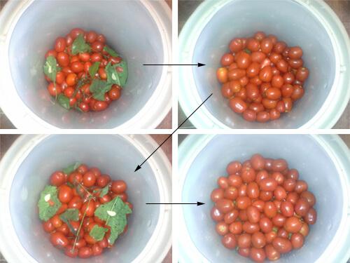 pomidory v bochke 7