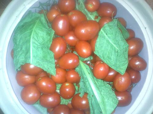 pomidory v bochke 9