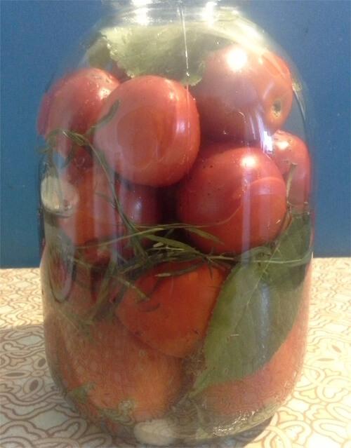 solenye pomidory 7