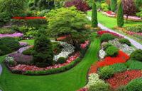 Растения и цветы в саду.