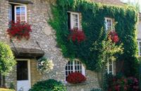 Растения и цветы на стенах и заборах.
