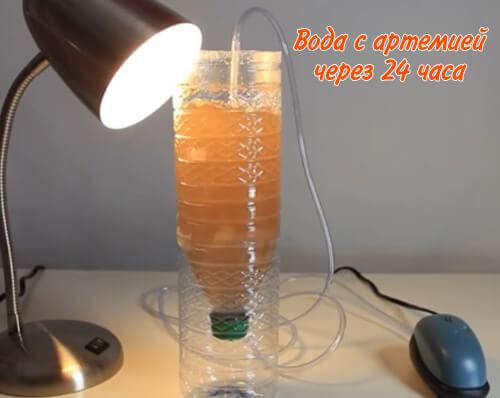 Вода с артемией через 24 часа становится оранжевой