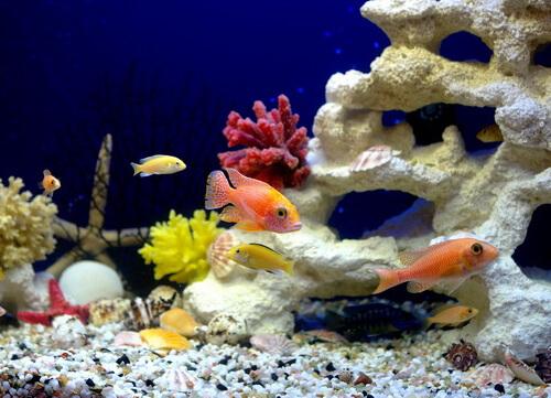 Химический состав воды в аквариуме