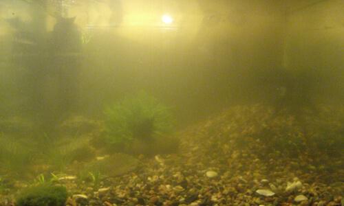 Желтая мутная вода в аквариуме