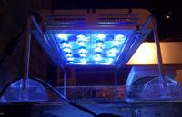 Светодиодное освещение аквариума (LED освещение)