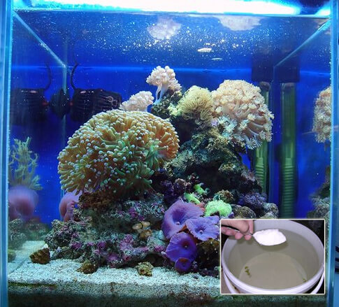 Добавление воды в морской аквариум