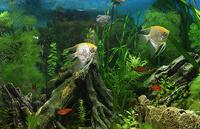 Запуск пресноводного аквариума