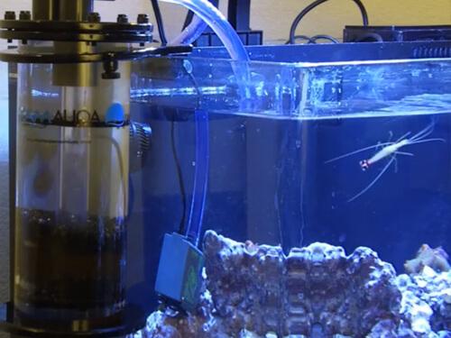 Как использовать активированный уголь в фильтре для аквариума?