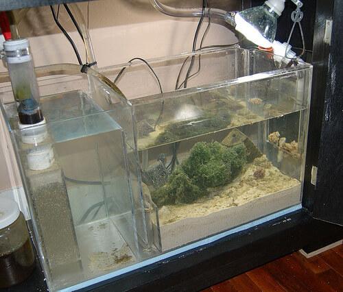 Рефуджиум для аквариума.