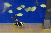 Карантинный аквариум для морских рыб.