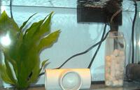 Карантинный аквариум для пресноводных рыб.