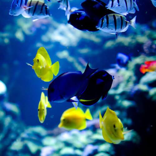 Только рыбные морские аквариумы.