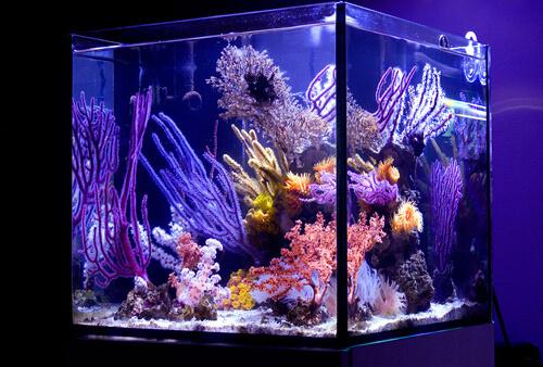 Морской нано аквариум.