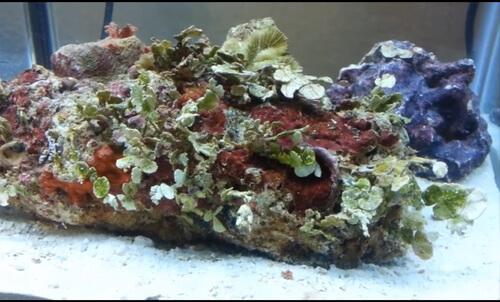 Что такое живые камни?