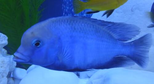 Голубой Дельфин.
