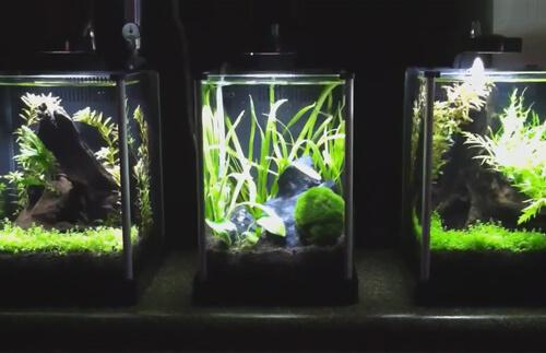 Маленький аквариум. Оборудование для маленького аквариума.