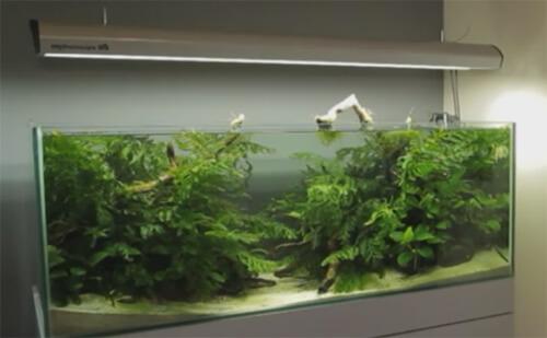 Пресноводный аквариум для новичков.