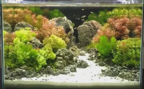 Тропические рыбки для новичков.