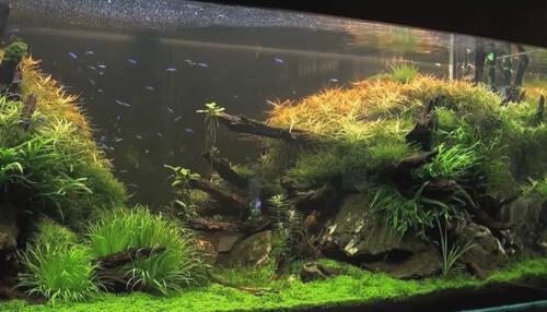 Аквариум для начинающих – 1. Создание аквариума, его размер и размещение.