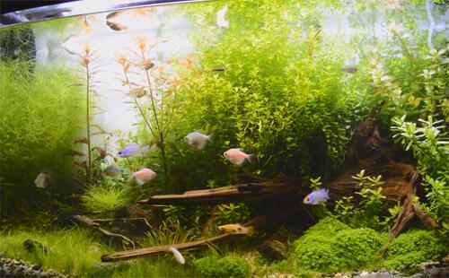 Аквариум с растениями или травник.