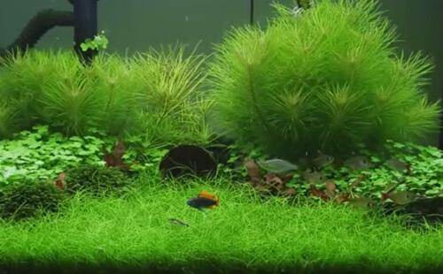 Выбор, посадка и содержание аквариумных растений.