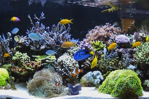 Виды аквариумов и их преимущества.