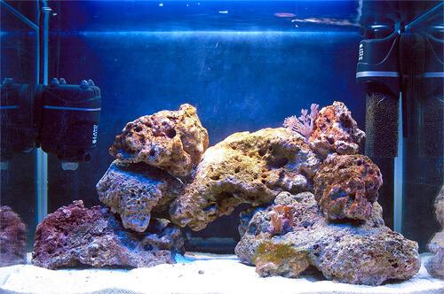 Островной дизайн (вид спереди) аквариума.
