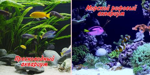 Пресноводный или морской? Какой аквариум выбрать?