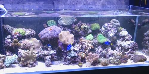 Отличия между пресноводными и морскими аквариумами.