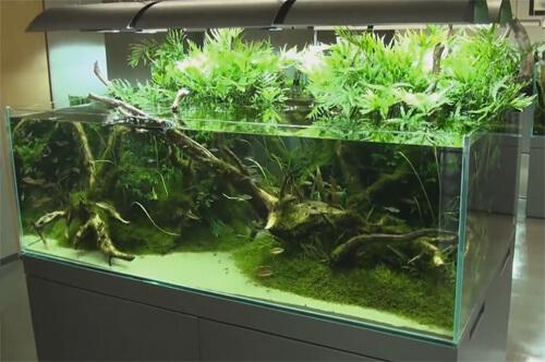 Посадка аквариумных растений в горшочки.