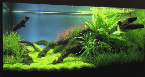 Освещение аквариума с живыми растениями.