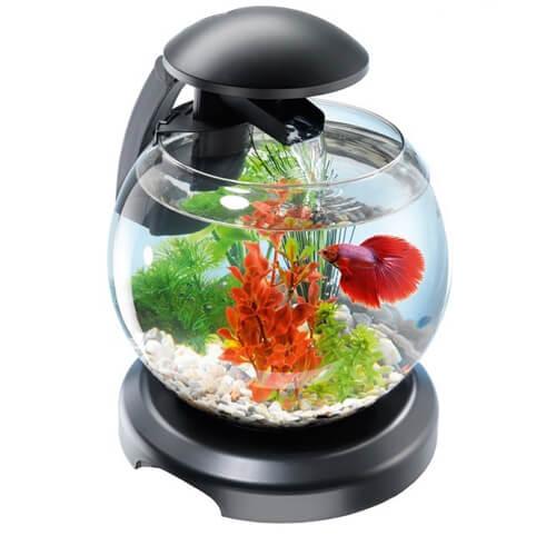 Круглый аквариум.