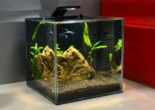 Маленький аквариум или аквариум для Петушка.