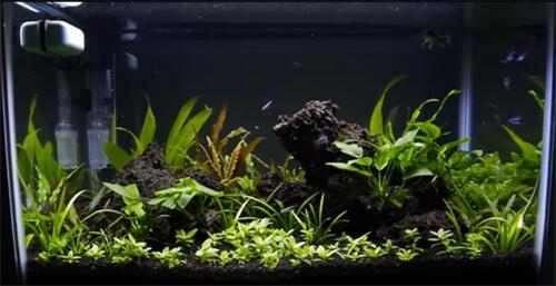 Водные растения. Как выращивать растения в аквариуме или советы по озеленению аквариума.