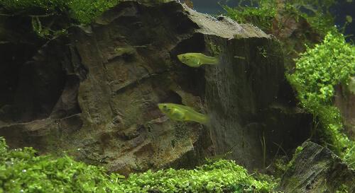 Вопросы об аквариуме и рыбках.