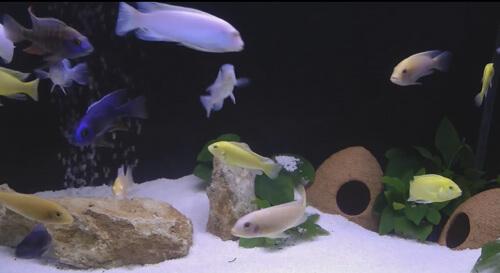 Часто задаваемые вопросы об аквариуме и рыбках.