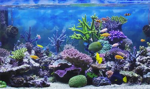 Запуск морского аквариума.