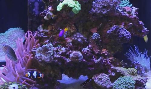 Оборудование, засолка воды, живые камни, рыбы – все, что нужно для запуска морского аквариума.