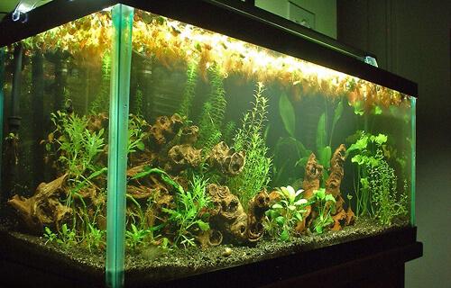 Аквариум для начинающих – 2. Основное аквариумное оборудование, приборы и украшения.