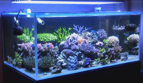 Настройка аквариума и оборудования.