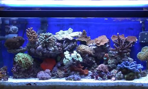 Уход за морским аквариумом с кораллами.